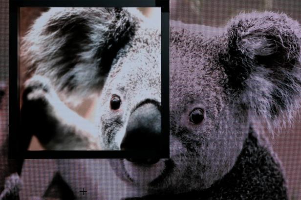 StewartFilmscreen_FIDELEDY Vision 40-Koala